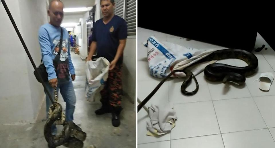 A young woman woke up at 4am to find a three-month python around her neck. Source: AsiaWire/Australscope
