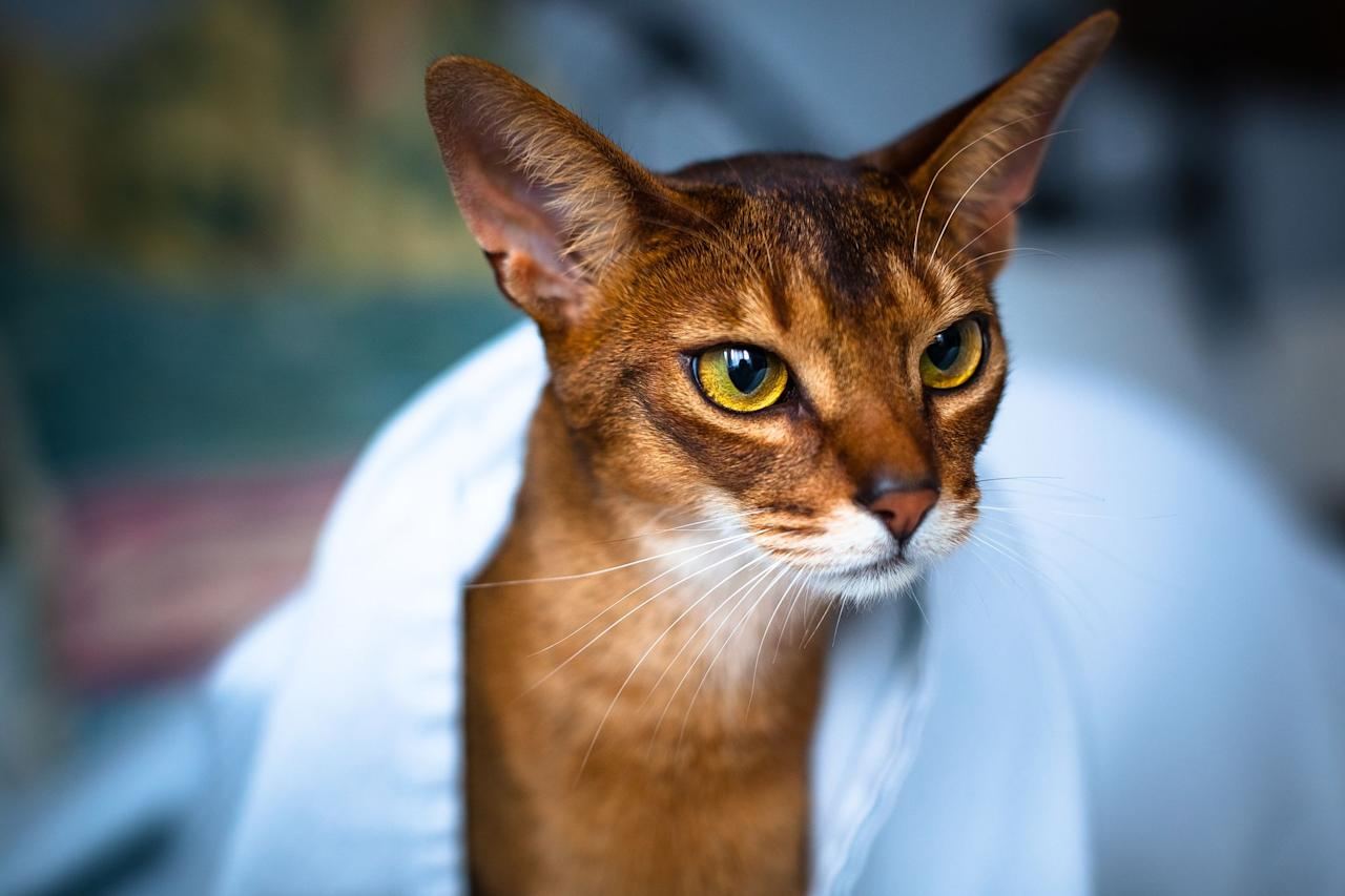 """<p>Most people think cats mix with water just about as well as oil does. These animals notoriously hate getting wet, and it may have a lot to do with their genetics. According to the Pet Health Network, many <a href=""""http://www.pethealthnetwork.com/cat-health/cat-behavior/do-cats-fear-water"""">domestic cats avoid water</a> because they don't actually need it to bathe, using their tongues to groom themselves instead. It's also common for cats to have coats that trap water, making it difficult to warm up when they get wet in colder climates. Despite this popular feline tendency to dislike the liquid, there are some cats that like water. Yes, seriously. </p><p>Cats that don't mind splashing around are typically descendants of <a href=""""https://www.petfinder.com/cat-breeds/collections/why-cats-love-water-cat-breeds-that-like-water/"""">wild cats from warmer climates</a>, according to Pet Finder. They range from animals who are less water averse to those who may even go for a swim from time to time. Particularly for owners who are water lovers themselves, these cats could make the perfect companions. You might also check out <a href=""""https://www.womansday.com/life/pet-care/g29765792/best-cat-breeds/"""">cat breeds</a> that are especially <a href=""""https://www.womansday.com/life/pet-care/g30230602/sweetest-cats-most-affectionate/"""">affectionate</a>, <a href=""""https://www.womansday.com/life/pet-care/g29006057/smartest-cat-breeds/"""">smart</a>, or <a href=""""https://www.womansday.com/life/pet-care/g29027429/cute-cat-breeds/"""">cute</a> when choosing the pet that's right for you.</p>"""