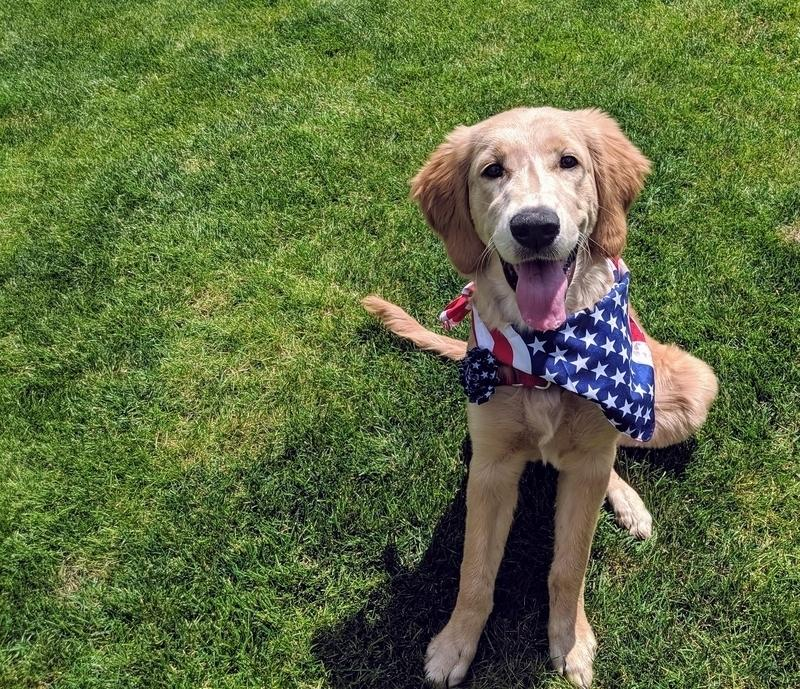 More dogs disappear July 4-5 than on any other days of the year. Fireworks that have been popping since the pandemic began make it worse.