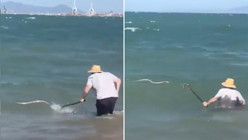 man walks out to sea and whacks sea snake with cane in qld