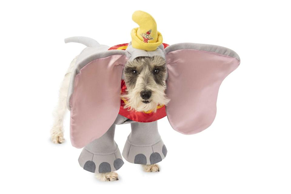 """<p>Dogs should have no trouble hearing commands in this costume. </p> <p><strong>Buy it!</strong> Dumbo Dog Costume, $24.44; <a href=""""https://www.anrdoezrs.net/links/8029122/type/dlg/sid/PEO25HalloweenCostumesforDogsthatWillHaveTrickorTreatersHowlingwithJoykbender1271PetGal12909733202109I/https://www.chewy.com/rubies-costume-company-dumbo-dog-cat/dp/184634"""" rel=""""sponsored noopener"""" target=""""_blank"""" data-ylk=""""slk:Chewy.com"""" class=""""link rapid-noclick-resp"""">Chewy.com</a></p>"""