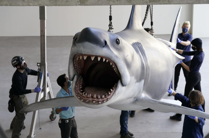 """A fiberglass replica of Bruce, the shark featured in Steven Spielberg's classic 1975 film """"Jaws,"""" is lifted into a suspended position for display at the new Academy of Museum of Motion Pictures, Friday, Nov. 20, 2020, in Los Angeles. The museum celebrating the art and science of movies is scheduled to open on April 30, 2021. (AP Photo/Chris Pizzello)"""