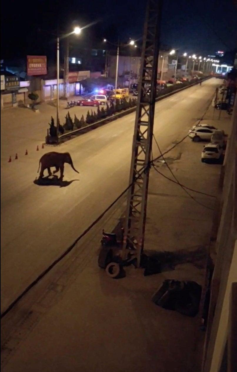 <p>An elephant walks along a road in Eshan, Yunnan province in China, on 27 May, 2021. </p> (via REUTERS)