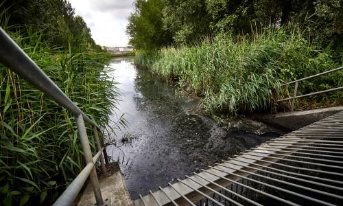Revealed: raw sewage poured into Olympic Park wildlife haven