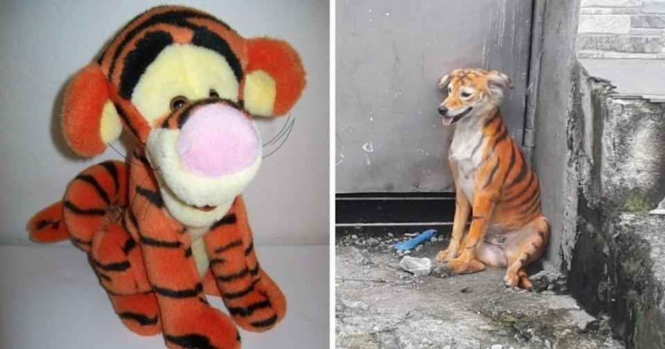 The painted dog bears a striking resemblance to the cartoon character Tigger from Winnie the Pooh. (Photo courtesy of @WeGotCharacter_/Twitter and @Persatuan Haiwan Malaysia-Malaysia Animal Association/Facebook)
