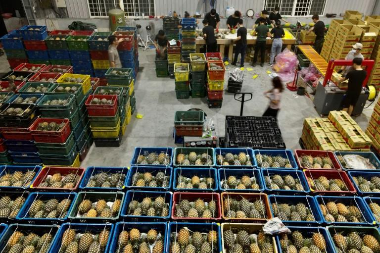 Crates of pineapples are sorted at a warehouse in Pingtung county