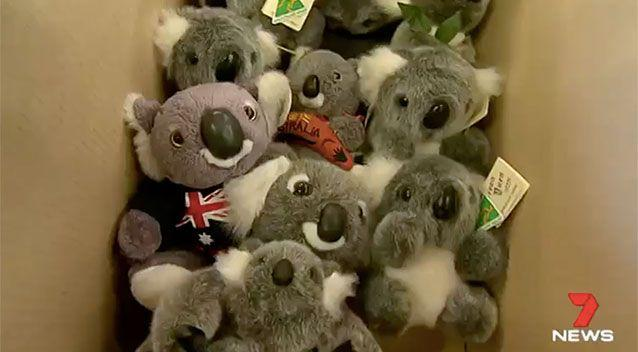 Fluffy koalas are left behind by the boxful. Source: 7 News