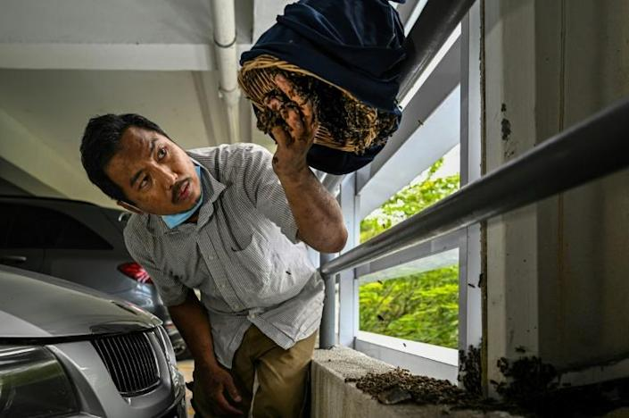 Ooi Leng Chye is a member of a group that saves bees and their nests when they are discovered in cities, seeking to prevent the creatures from being destroyed by those who view them as pests