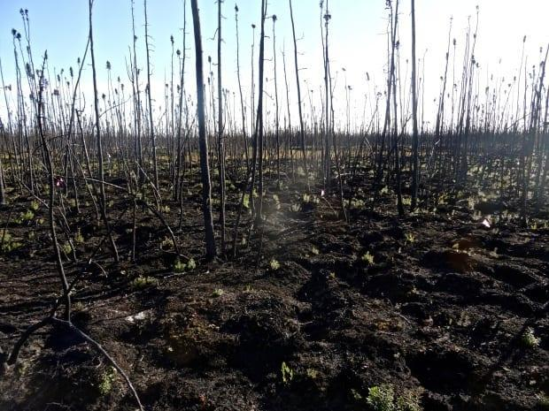 A burned area around Kakisa from the 2014 fire year. This black surface will absorb a lot of energy that will be conducted down to the permafrost layer and cause the thaw to accelerate.