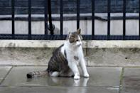 LONDON, ENGLAND - OCTOBER 08: Larry the cat is seen before Britain's Prime Minister Boris Johnson's meeting with President of Ukraine Volodymyr Zelensky at number 10 Downing Street in central London, United Kingdom on October 8, 2020. (Photo by Kate Green/Anadolu Agency via Getty Images)