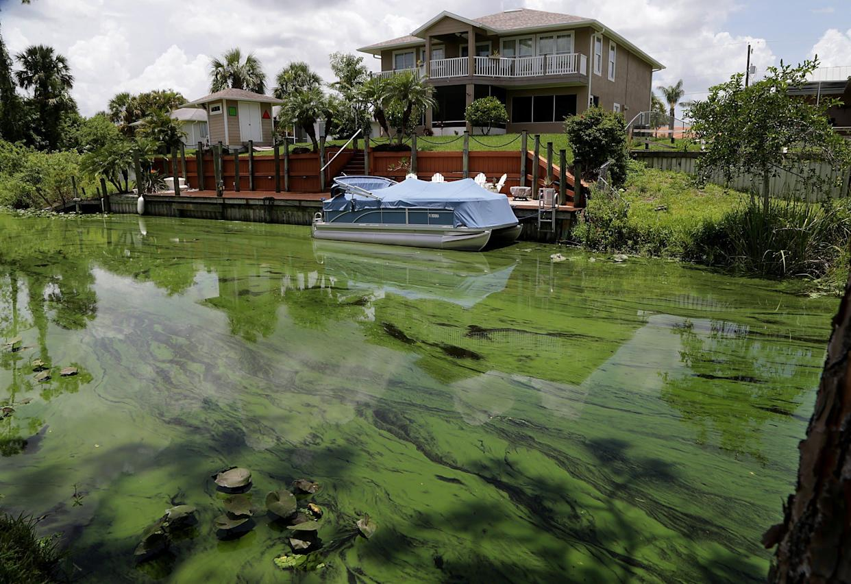 A deepening algae bloom seen at a canal behind houses on the south side of Calooshatchee River in the River Oaks on June 27. (Photo: Miami Herald via Getty Images)