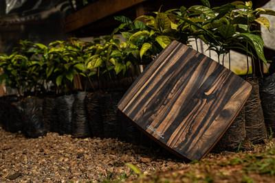 Small Stella Falone Cutting Board & Ebony Tree Seedlings Awaiting Planting