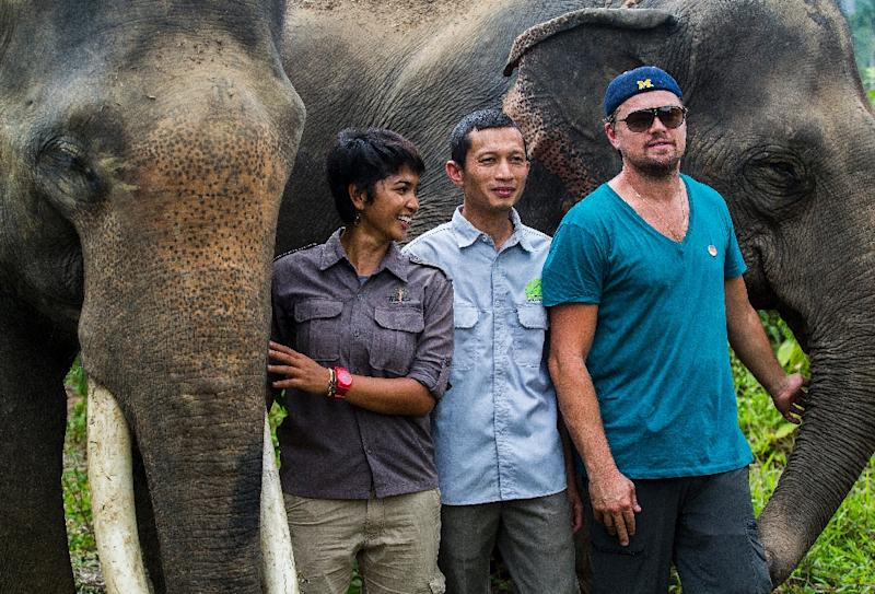 Oscar-winning actor Leonardo DiCaprio (R) poses with elephants at the Leuser National Park in Indonesia's Aceh province, in a picture taken on March 26, 2016 and released by the Foundation of Forest, Nature and Environment of Aceh