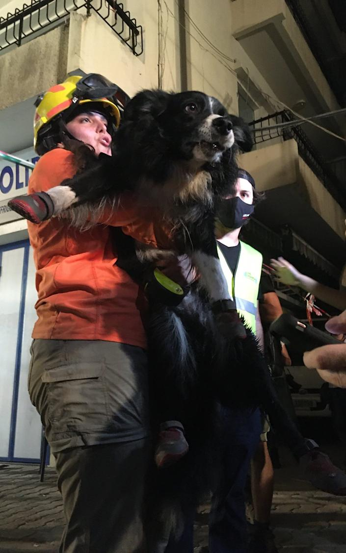 Flash the rescue dog at work in Beirut