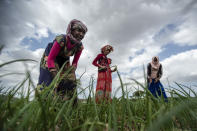 Ethiopian women work to turn over the soil and remove weeds from a field of onions near the village of Merebmieti, an area relatively unaffected by the current conflict, south of Mekele, in the Tigray region of northern Ethiopia, on Wednesday, May 12, 2021. The war in Tigray started in early November, shortly before the harvest season, as an attempt by Ethiopian Prime Minister Abiy Ahmed to disarm the region's rebellious leaders. (AP Photo/Ben Curtis)