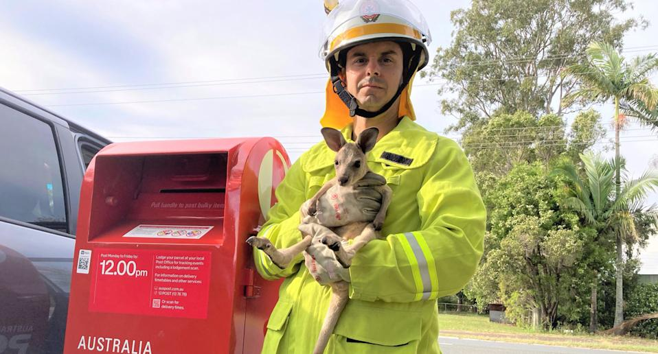 A Pimpama Fire and Rescue Service officer holds a joey rescued from a mailbox in Woongoolba on the Gold Coast.