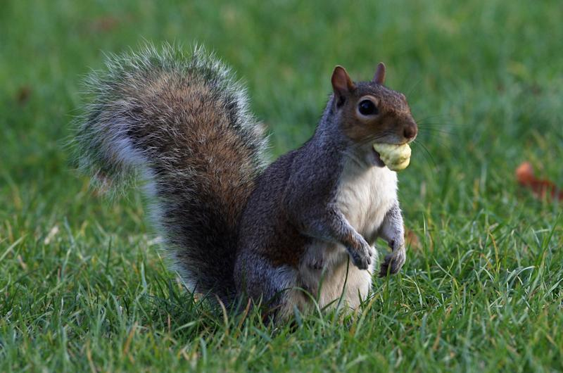 Colorado squirrel tests positive for bubonic plague, health officials say