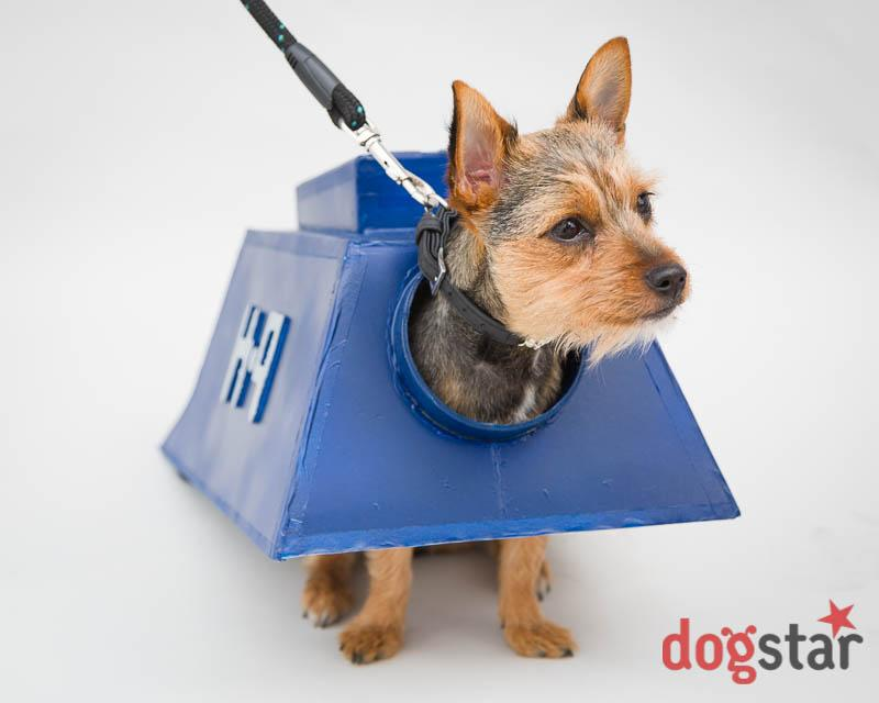 <p>Do you have a four-legged friend who likes to dress up as a sci-fi character? Or a pooch that looks like Princess Leia? Take them along to the 'dressed-up dog' photo session, in association with Dogstar photo dog photography. (Sci-Fi London) </p>