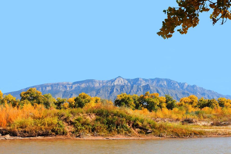 The Sandia Mountains and the Bosque along the Rio Grande River with the fall colors showing