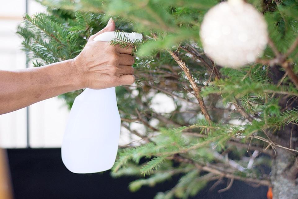 Person spraying their Christmas tree with water to keep it alive