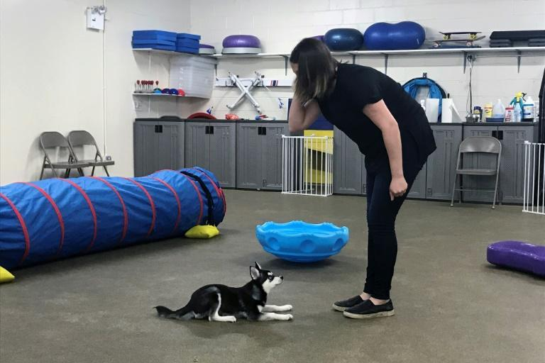 Dog trainer Hannah Richter works with Lucy at the Beasty Feasty store in New York