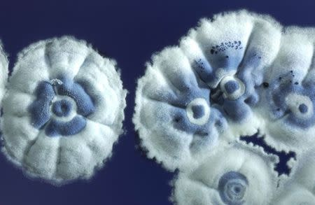 A handout photograph shows Streptomyces coelicolor