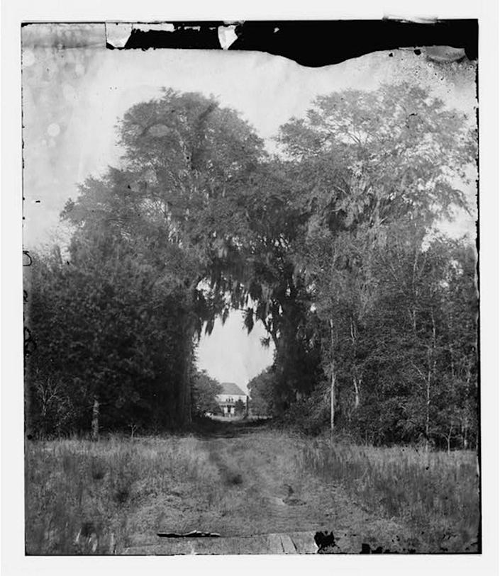 A natural arch leads to the plantation house at Seabrook Plantation, in present day Hilton Head Plantation. The photographer, Timothy O'Sullivan, lived from 1840 to 1882 and took many photos of the Port Royal Sound area in the years leading up to the Civil War.