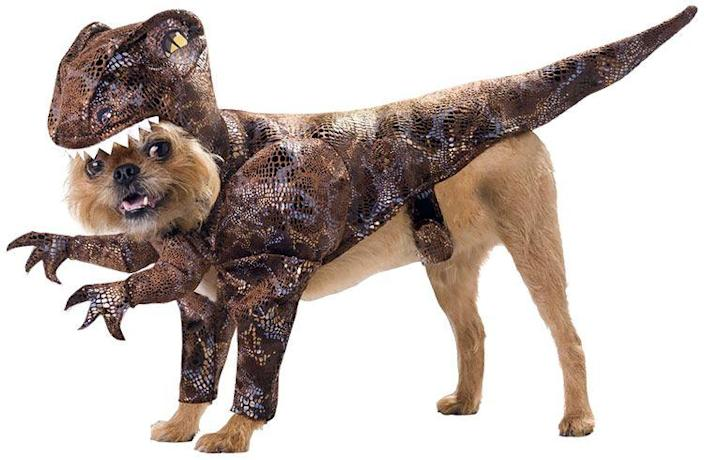 "<p>Why are you like this?</p> <br> <br> <strong>Animal Planet</strong> Raptor Dog Costume , $19.99, available at <a href=""https://www.healthypets.com/animal-planet-raptor-dog-costume-large.html"" rel=""nofollow noopener"" target=""_blank"" data-ylk=""slk:Healthy Pets"" class=""link rapid-noclick-resp"">Healthy Pets</a>"