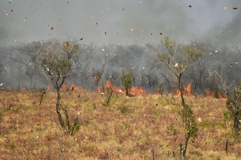 Dust and leaves blow in the wind as a fire burns near Charagua in Bolivia, in August 2019 (AFP Photo/Aizar RALDES)