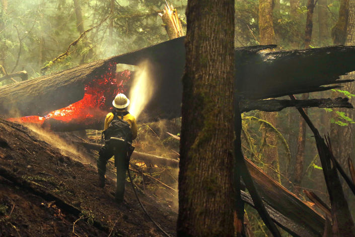 FILE - In this Aug. 26, 2015, file photo, firefighter Jay Flora sprays a hot spot on a downed tree along the Trail of Cedars across the river from Newhalem, Wash. The region, famous for its rainfall, has long escaped major burns even as global warming has driven an increase in both the size and number of wildfires elsewhere in the American West. But according to experts, previously too-wet-to-burn parts of the Pacific Northwest now face an increasing risk of significant wildfires because of climate change. (Mark Mulligan/The Herald via AP, File)
