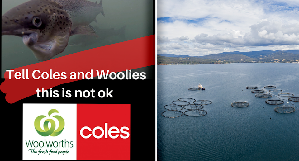 An online campaign post asking for people to boycott buying salmon (left) and a salmon farm (right).