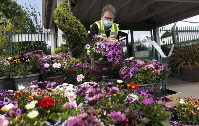 Boyd Douglas-Davies, Communications Director for British Garden Centres, arranges a plant display at Osterley Garden Centre in London as the country is in lockdown to help stop the spread of coronavirus, Wednesday, May 13, 2020. Some of the coronavirus lockdown measures are being relaxed in England on Wednesday, with garden centres reopening but with extra measures such as social distancing. (AP Photo/Kirsty Wigglesworth)