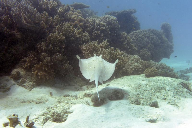 Swimmer dies in Australia after being stung by stingray