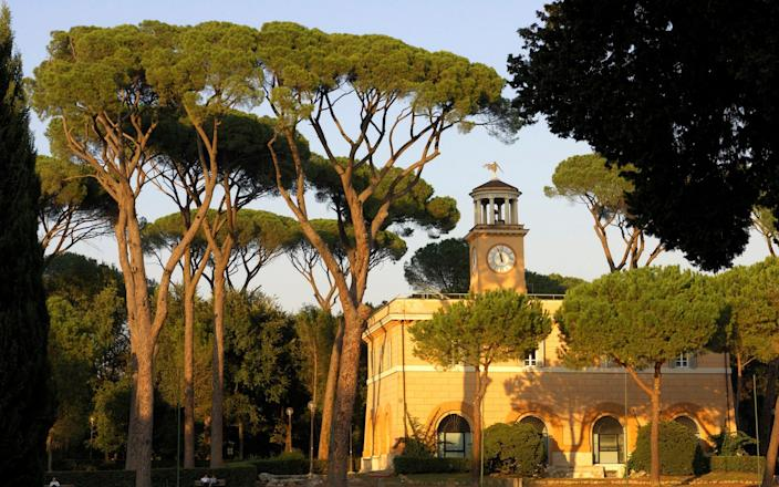 Umbrella pines in Villa Borghese, one of Rome's historic parks