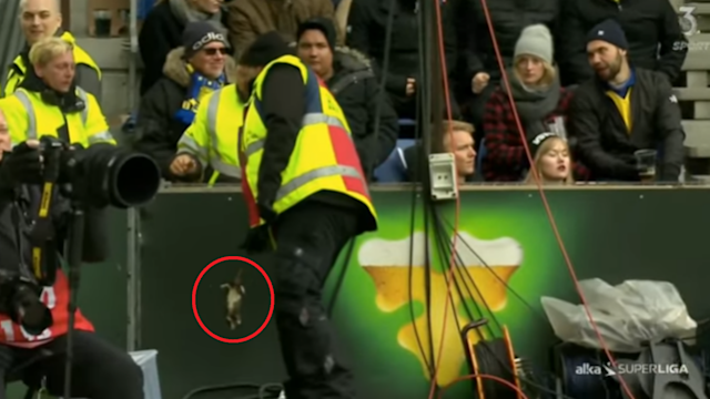 The disgusting missiles were thrown during the Danish Superliga game on Monday, with an investigation now set to be launched in the coming weeks