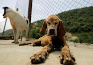 Rescued dogs at the Woof N' Wags shelter on the outskirts of the village of Kfar Chellal, south of the Lebanese capital Beirut