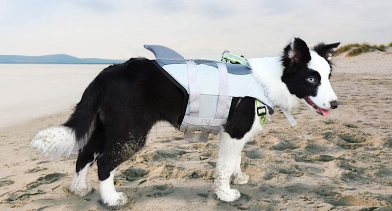 Deenkk Dog Water Vest. Image via Amazon.