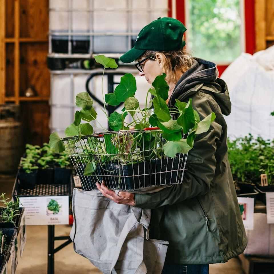 "<div class=""caption"">Customers buying plants and produce at Granor Farm</div><cite class=""credit"">Photo by Jamie and Eric Photography</cite>"