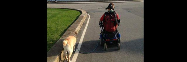 A dog walking alongside a young man in a wheelchair
