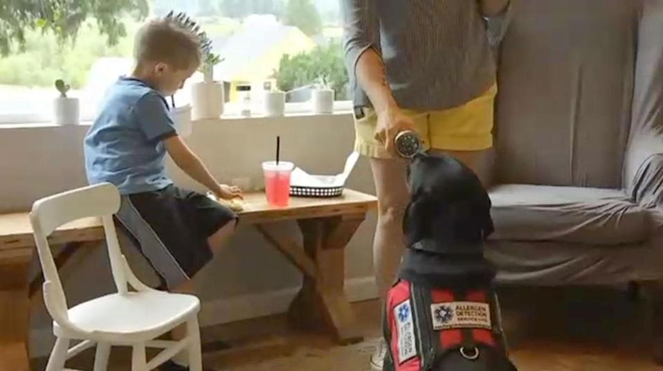 The dog sniffs out gluten before Toby gets near it. Source: Fox 6