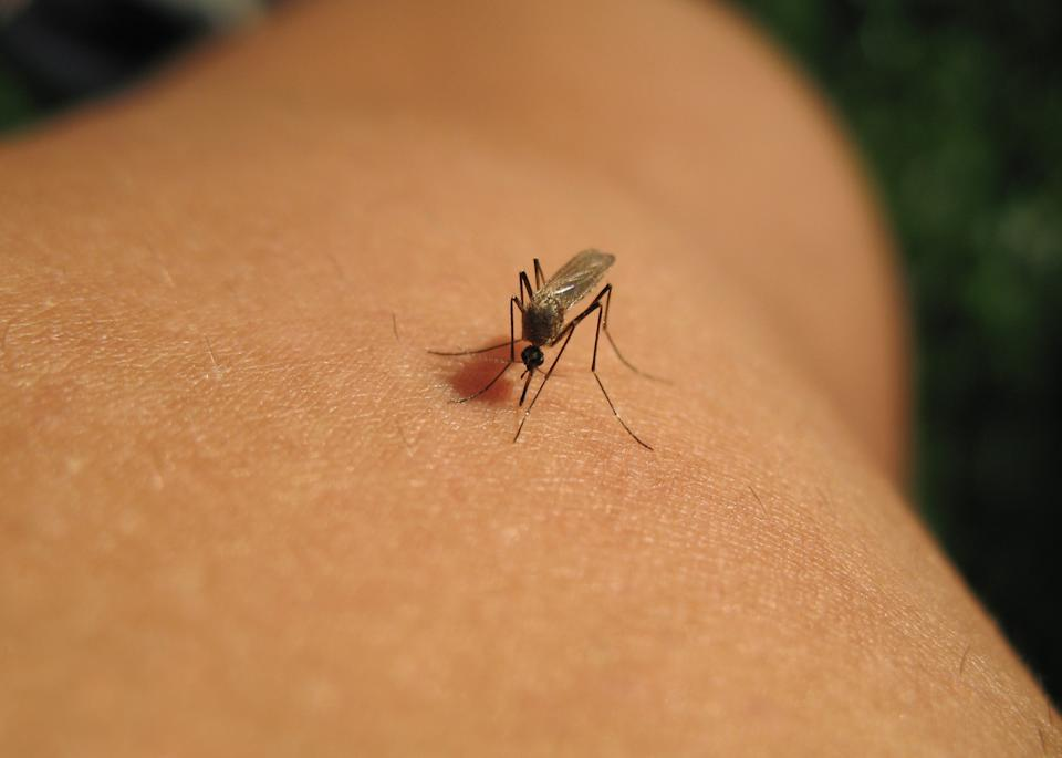 According to the CDC, 17 cases of West Nile virus disease in people have been reported to the agency. In some cases, the virus can cause flu-like symptoms similar to that of COVID-19 symptoms. (Photo: Getty Images)