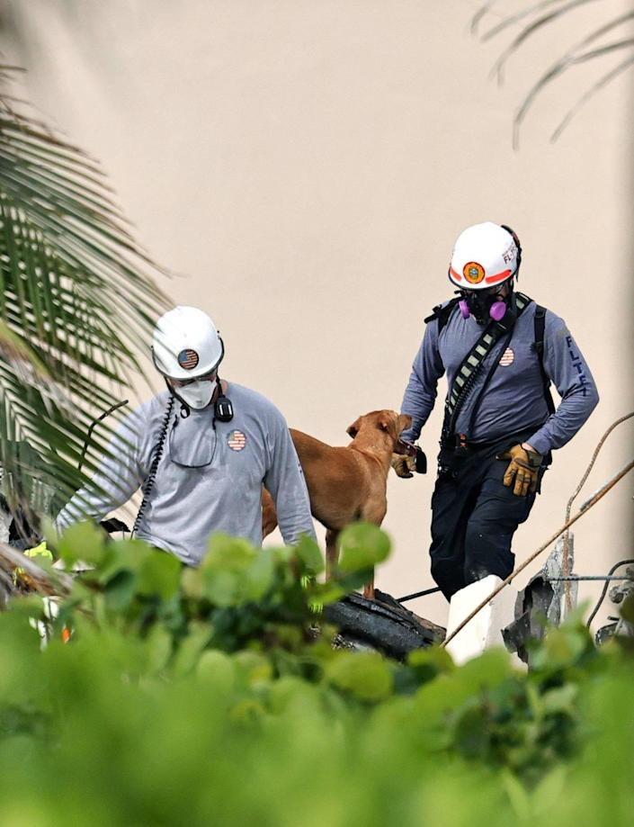 Search and rescue personnel with dogs search for survivors through the rubble at the Champlain Towers South Condo in Surfside, Florida, Friday, June 25, 2021. The apartment building partially collapsed on Thursday, June 24.