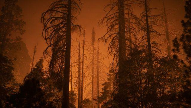 """Incident commanders said the Windy Fire, which has already charred 25,000 acres (10,000 hectares) had burned into the remote Peyrone Sequoia Grove and the Red Hill Grove. """"It was running toward multiple trees and (firefighters) were able to get it out, but it did get into the crown of one of the sequoias,"""