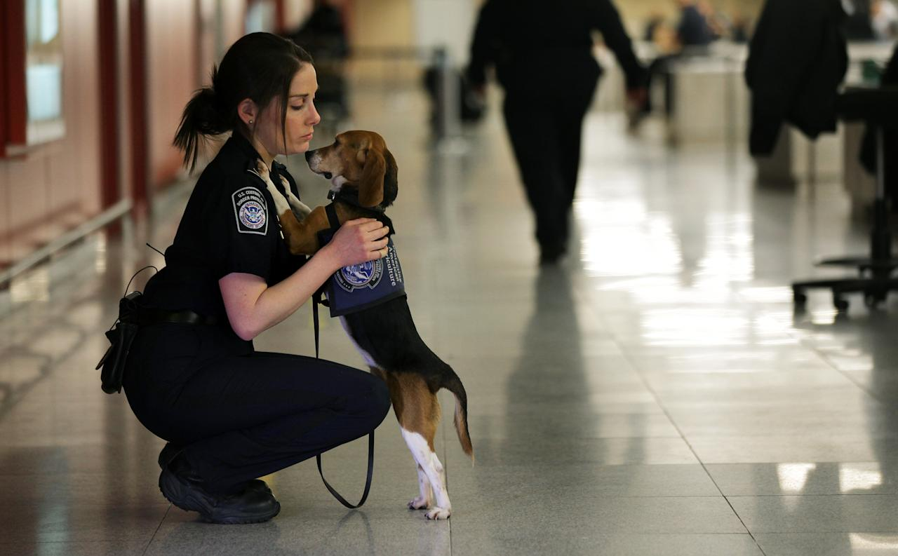 In this Feb. 9, 2012 photo, Meghan Caffery, a U.S. Customs and Border Protection Agriculture Specialist, hugs Izzy, an agricultural detector beagle whose nose is highly sensitive to food odors, at John F. Kennedy Airport's Terminal 4 in New York. This U.S. Customs and Border Protection team works to find foods and plants brought in by visitors that are considered invasive species or banned products, some containing insects or larvae know to be harmful to U.S. agriculture. (AP Photo/Craig Ruttle)
