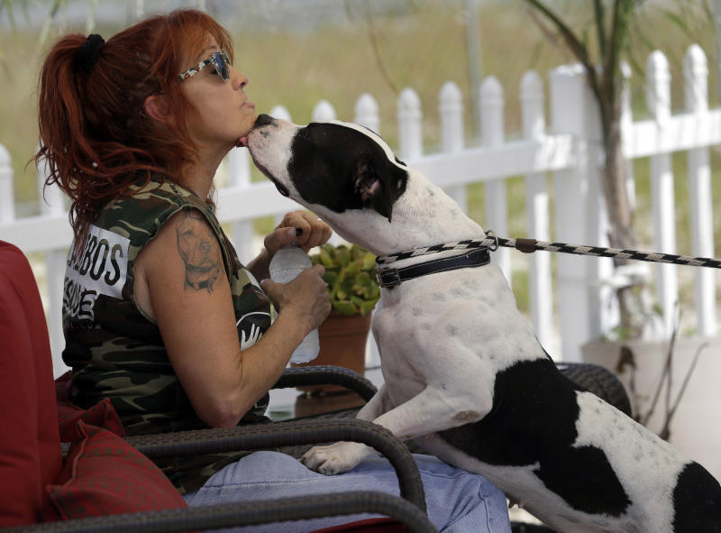 "In this Oct. 10, 2013, photo, Tia Maria Torres, star of Animal Planet's ""Pit Bulls and Parolees,"" is licked by a pit bull during the filming of an episode of the show's fifth season in New Orleans. Torres, who runs the nation's largest pit bull rescue center and has long paired abused and abandoned dogs with the parolees who care for them, has moved her long-running reality TV series from southern California to New Orleans, where hurricanes and overbreeding have left many pit bulls abandoned or abused. (AP Photo/Gerald Herbert)"