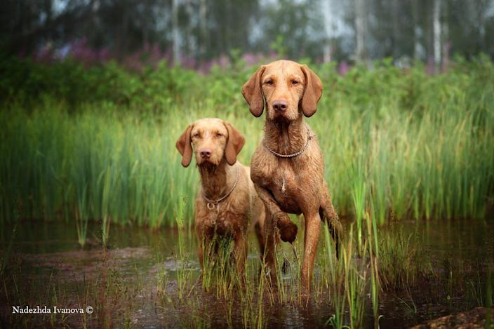 <p>Dogs Dio and Afina have been captured running through a lake chasing birds. </p>