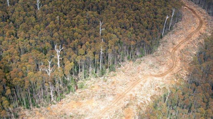 Forestry group offers olive branch