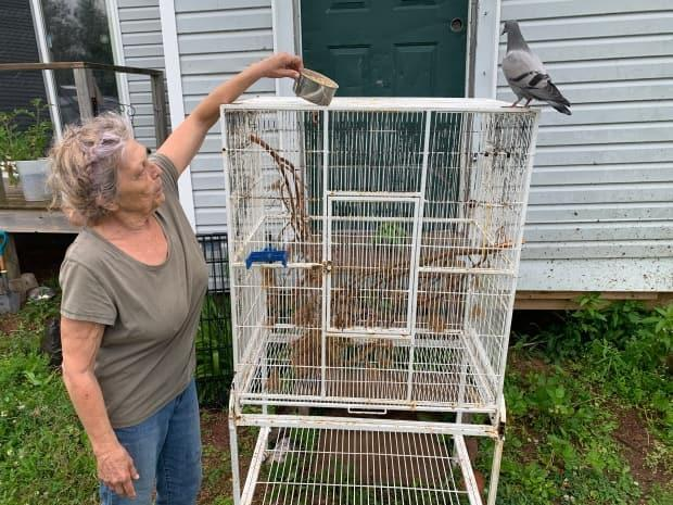 Candy Gallant says she's seen 'hoarding and breeding for money' and other incidents of animal mistreatment in P.E.I. (Laura Meader/CBC - image credit)