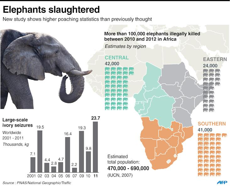 There could be as few as 470,000 African elephants, according to the environmental group WWF (AFP Photo/)