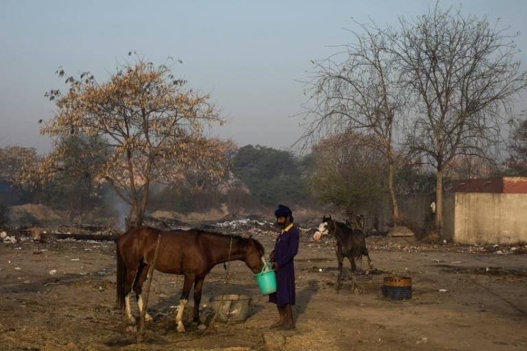 """At the protest camp, Nihangs tend to horses they rode from their Punjab homes hundreds of miles away, practise the Sikh martial art of """"Gatka"""" and make a cannabis-laced sacramental drink"""